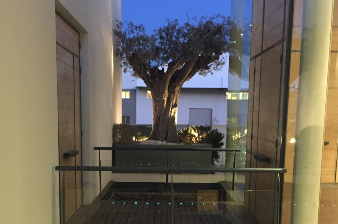 Pasarela-con-olivo-noche-1280x850.jpg